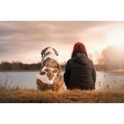 Zostań behawiorystą psów