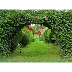 Kurs projektowania ogrodów